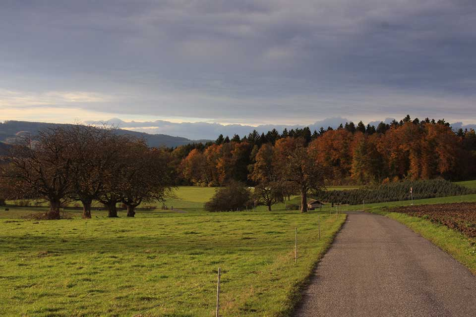 indian summer, ein bisschen, November 2012